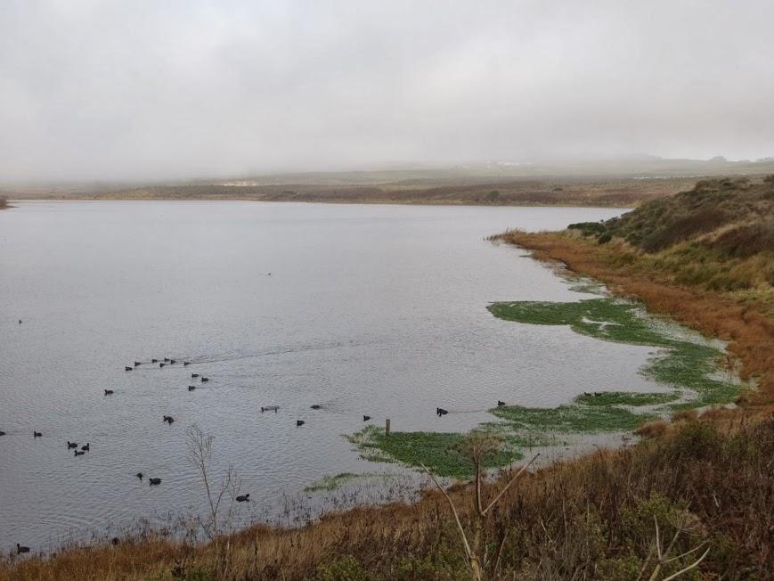 abbott's lagoon2