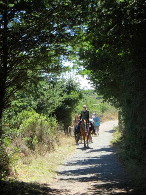 Horse Trails in Point Reyes