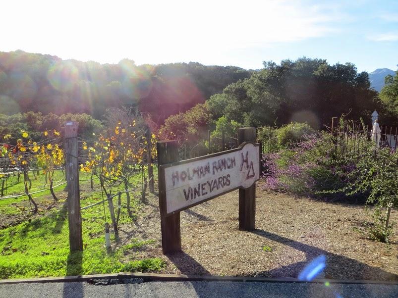 vineyard1