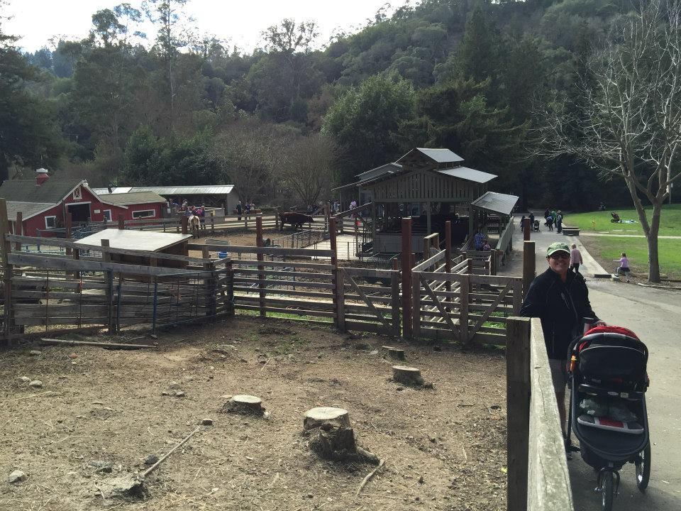 tilden little farm9